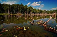 Lago largo Imagens de Stock