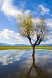 Lago Lashihai fotografia stock