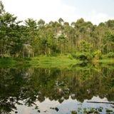Lago a lembang Immagine Stock
