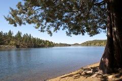 Lago Linx Foto de Stock