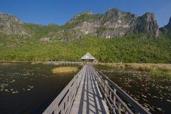 Lago lotus in Tailandia Fotografia Stock Libera da Diritti