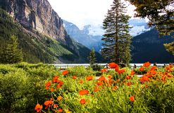 Lago Louise In Full Summer Bloom Fotografie Stock