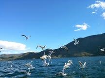 Lago Lugu e gabbiano 2 Fotografie Stock