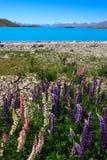 Lago lupins Fotografia Stock