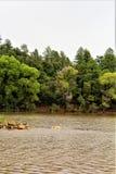 Lago lynx, distrito da guarda florestal de Bradshaw, Prescott National Forest, estado do Arizona, Estados Unidos fotografia de stock