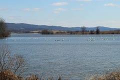 Lago médio creek fotos de stock