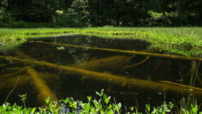 Lago místico com timelapse afundado das árvores - zorra disparou do loch misterioso - hd completo 1920 x 1080 video estoque
