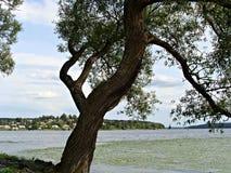 Lago Malaren Fotografie Stock