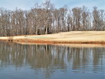 Lago mallard en el parque de Tanglewood fotografía de archivo libre de regalías