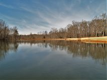 Lago mallard en el parque de Tanglewood imagenes de archivo