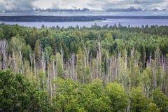 Lago Mamry in Polonia Immagini Stock Libere da Diritti