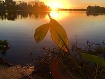 Lago mango Imágenes de archivo libres de regalías