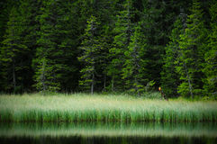 Lago Maricheyka Fotografia de Stock Royalty Free