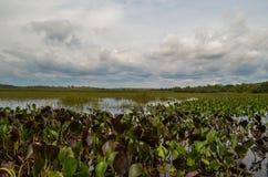 Lago Marimbus foto de archivo libre de regalías
