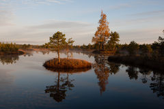 Lago marsh Fotografie Stock Libere da Diritti