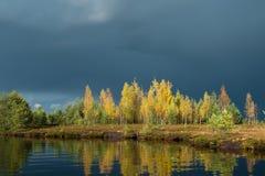 Lago marsh Foto de archivo libre de regalías