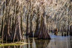 Lago Martin in st Martin Parish, Luisiana fotografia stock libera da diritti