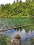Lago, mas verde cor-de-rosa fotografia de stock royalty free
