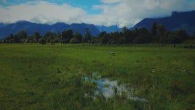 Lago Matheson, cuoco del supporto, isola del sud, Nuova Zelanda Fotografia Stock