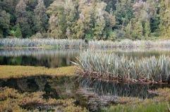 Lago Matheson - país de los glaciares Imagen de archivo libre de regalías