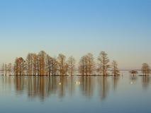 Lago Mattamuskeet in inverno fotografia stock