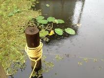 Lago Maurepas Lily Pads Fotos de Stock