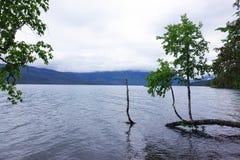 Lago McDonald, ghiacciaio N P - Il Montana Immagine Stock