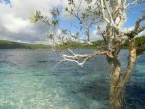 Lago Mckenzie Fraser Island Queensland Australia tree Foto de archivo