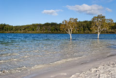 Lago McKenzie, isla de Fraser Fotografía de archivo libre de regalías