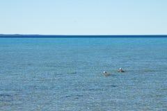 Lago Michigan con due gabbiani Fotografie Stock Libere da Diritti