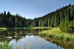Lago misterioso entre abeto Fotografia de Stock
