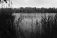 Lago monocromático Fotos de archivo libres de regalías