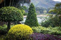 Lago, montanha e tipos diferentes de plantas no parque Imagem de Stock Royalty Free