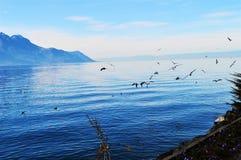 Lago, Montreaux, la Svizzera ed uccelli geneva Immagini Stock Libere da Diritti