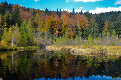 Lago morto nella foresta, montagne arpathian del ¡ di Ð, Skole, Uktaine Fotografia Stock