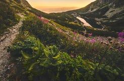 Lago mountain al tramonto con i fiori e la traccia di escursione in Foregro Fotografia Stock Libera da Diritti