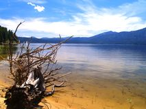 Lago mountain con el árbol Imagen de archivo libre de regalías