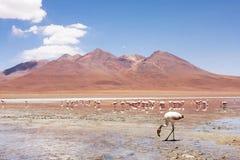 Lago mountain en Bolivia Imagen de archivo libre de regalías