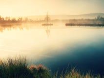 Lago mountain en la atmósfera soñadora, árbol en la isla Foto de archivo libre de regalías