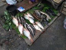 Lago myanmar Inle (Burma) Foto de Stock Royalty Free