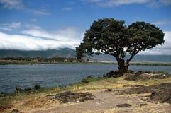 Lago na cratera de Ngorongoro, Tanzânia imagens de stock