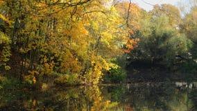 Lago na floresta vídeos de arquivo