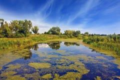 Lago na floresta Fotos de Stock