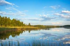 Lago na floresta Fotos de Stock Royalty Free