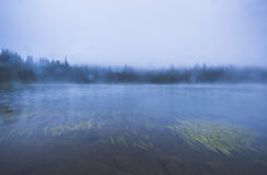 Lago na floresta com muita névoa Imagem de Stock