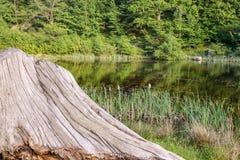 Lago na floresta com tronco de árvore Imagens de Stock Royalty Free