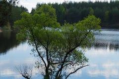 Lago na floresta e madeira em Kurowski Imagens de Stock