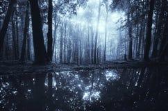 Lago na floresta escura na noite com luar Imagens de Stock
