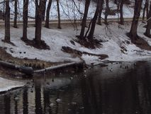 Lago na manhã com patos fotos de stock