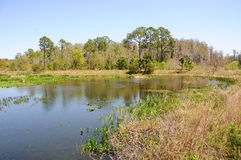 Lago na terra do pântano de Florida Imagens de Stock Royalty Free